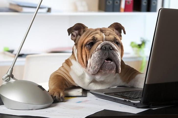 office dog.jpg